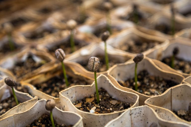 Crowdfunding for Seed Money